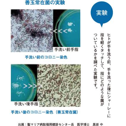 善玉常在菌の実験